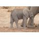 Foto auf Plexiglas - Baby Elefant