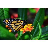Foto auf Plexiglas - Schmetterling