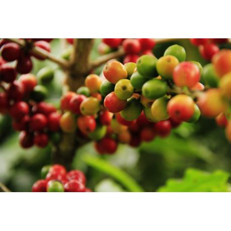 Foto auf Plexiglas - Kaffee Bohnen
