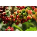 Foto auf Plexiglas - Kaffeebohnen