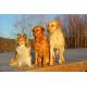 Foto auf Plexiglas - Hunde