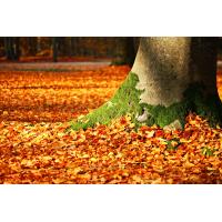 Foto auf Plexiglas - Herbst