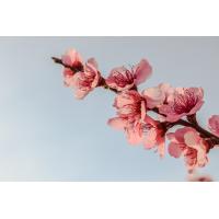 Foto auf Plexiglas - Blumenzweig