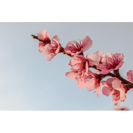 Foto auf Plexiglas -  Zweig der Blumen