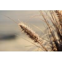 Foto auf Plexiglas - Gras
