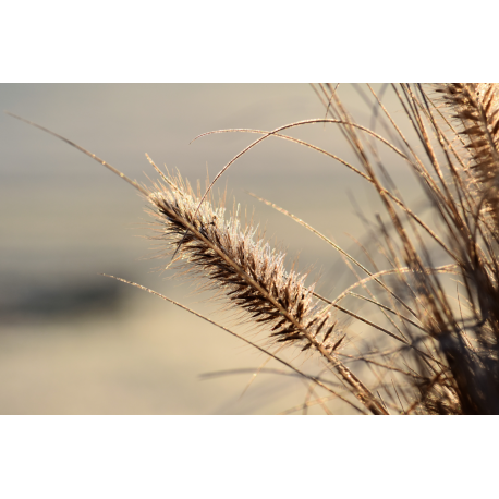 Foto auf Plexiglas - Grass