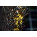 Foto auf Plexiglas - Bienen Wabe