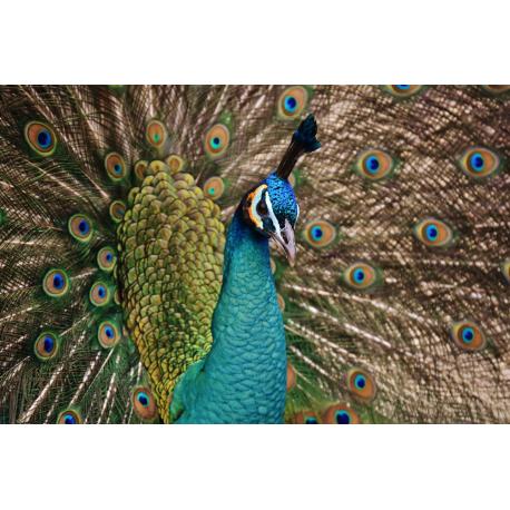 Foto auf Plexiglas - Pauw