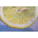 Foto auf Plexiglas - Zitronenscheibe