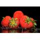 Foto auf Plexiglas - Erdbeeren