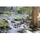 Foto auf Plexiglas - Fluss