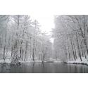 Foto auf Plexiglas - Winter