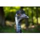 Foto auf Plexiglas - Emoe