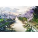 Foto auf Plexiglas - Japan
