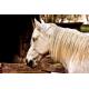 Foto auf Plexiglas - Pferd