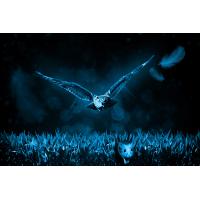 Foto auf Plexiglas - Eule auf der Jagd