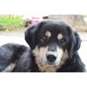 Foto auf Plexiglas - Hund