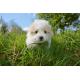 Foto auf Plexiglas - Puppy