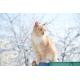 Foto auf Plexiglas - Katze