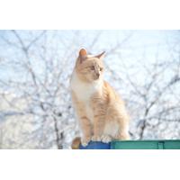 Foto auf Plexiglas - Rote Hauskatze