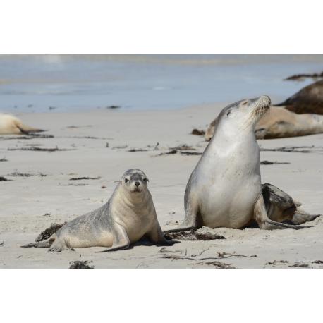 Foto auf Plexiglas - Zeehonden