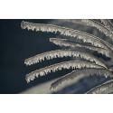 Foto auf Plexiglas - Winterzweige