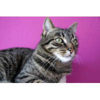 Foto auf Plexiglas - Hauskatze