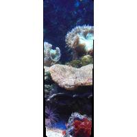 Mülltonnenaufkleber (Koralle)