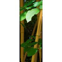 Mülltonnenaufkleber (Bambus)